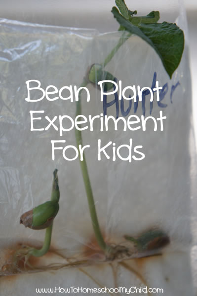 Bean Plant Experiment for Kids