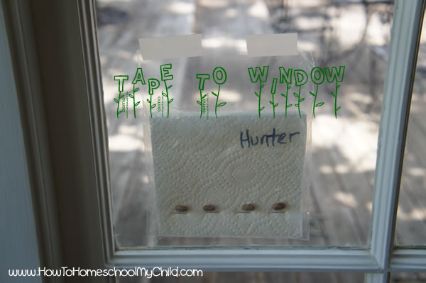Bean Plant Experiment for Kids - Tape