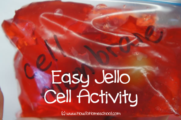How to Make a 3D Cell Model with Jello